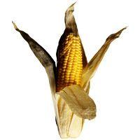 buttermilk-corn-bread-1973