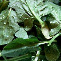 warm-cabbage-salad-2732