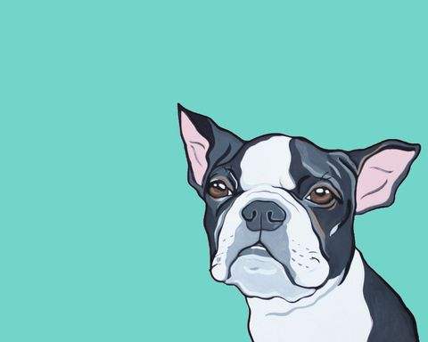 Dog, Carnivore, Dog breed, Snout, Working animal, Boston terrier, Illustration, Companion dog, Canidae, Paint,