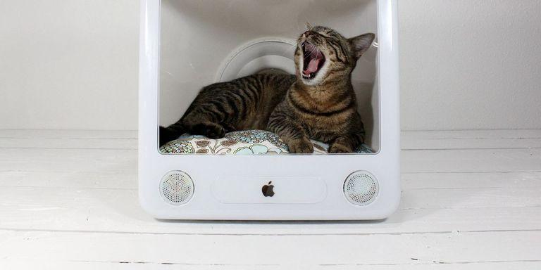 Handmade cat bed ideas diy pet furniture for Easy diy cat furniture