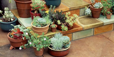 clusters of pots