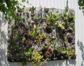 succulent quilt