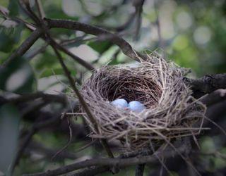 birds nest in a tree with a yard below