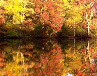 Reflections in pond on lovely autumn day
