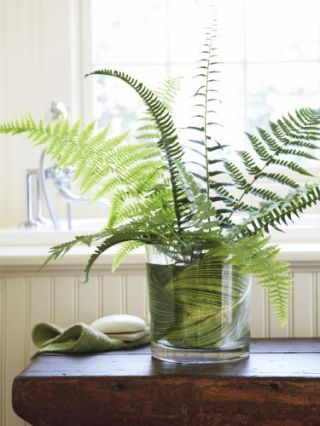 Fern arrangement