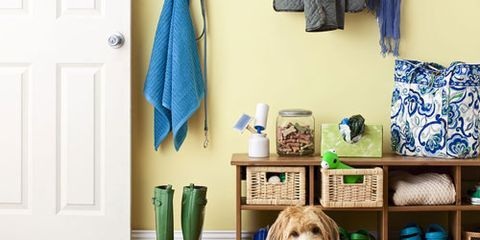 shaggy dog on floor surrounded with children's gear