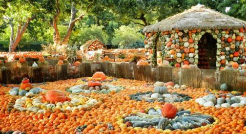 Dallas Arboretum Pumpkin Village Halloween Family Activities