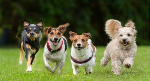 Cities That Pamper Pets Pet News