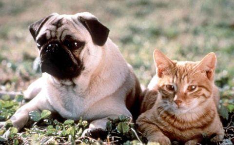 10 Movie Pets We Wish We Owned - Cute Movie Pets