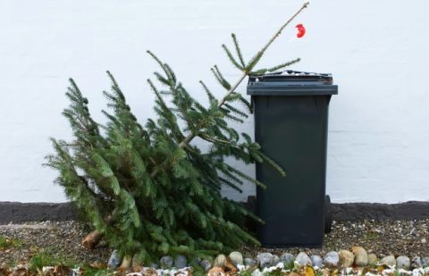 image - When To Take Christmas Tree Down