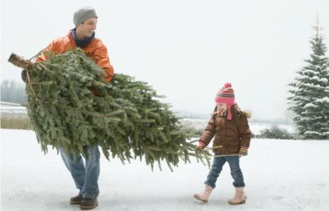 choose a healthy green tree with few brown needles - What Do You Put In Christmas Tree Water