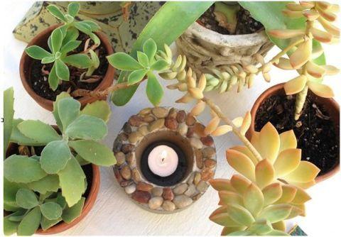 Leaf, Terrestrial plant, Flowerpot, Circle, Design, Annual plant, Houseplant, Herbaceous plant, Perennial plant, Stonecrop family,