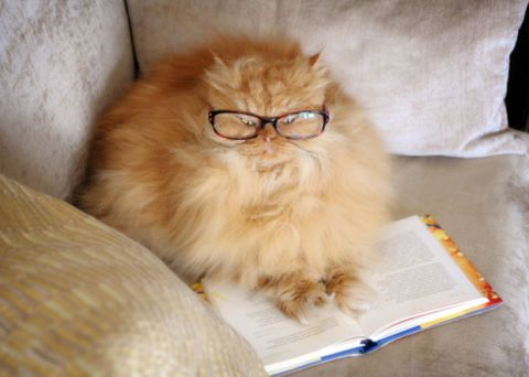 Cats Who Clearly Love to Read , Funny Cat Pictures