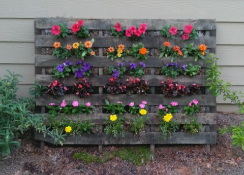 Plant, Flower, Shrub, Petal, Purple, Garden, Groundcover, Annual plant, Floristry, Siding,
