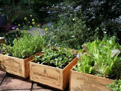 gardening crates