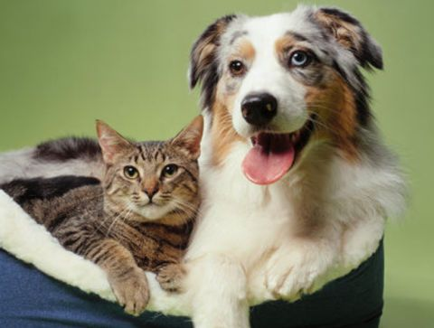 Official State Pets - State Dogs and Cats