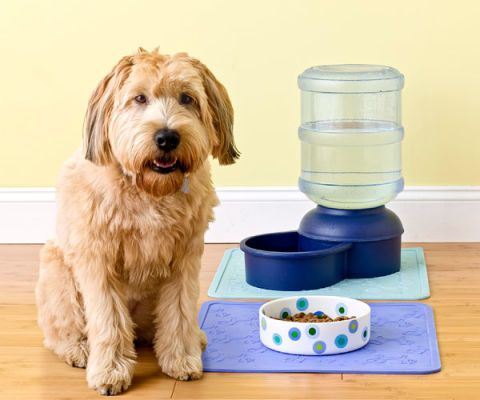 dog with water bowl and dish