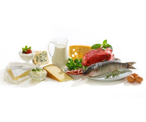 assortment of protein foods