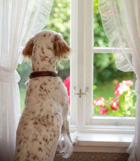 Dog Behavior Problems - Questions About Dog Behaviors