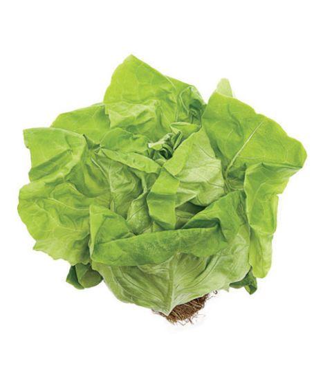 butterhead boston lettuce