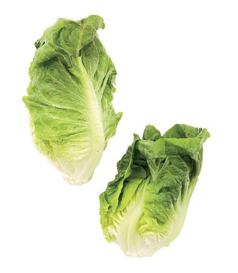 butterhead bibb lettuce
