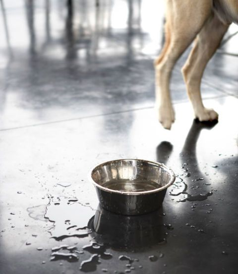 Messy Dog Bowl