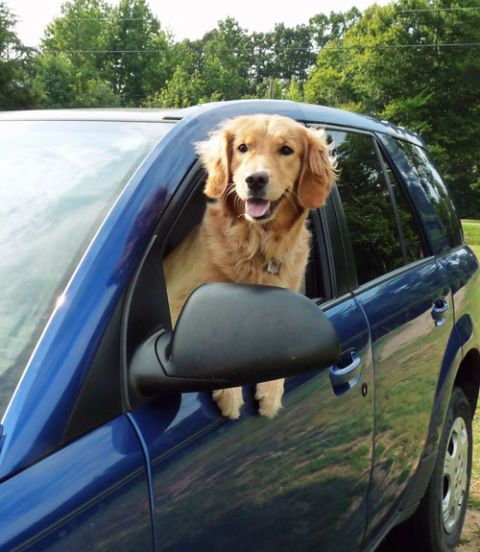 dog hanging out car window
