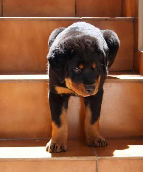 puppy on the stairs