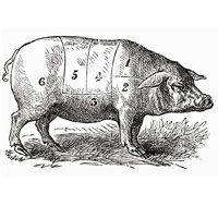rigatoni-shredded-pork-1934