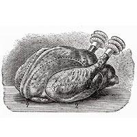 skillet-chicken-wine-2837
