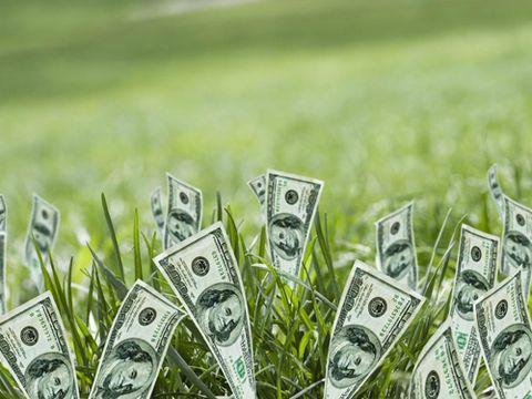 money growing in lawn