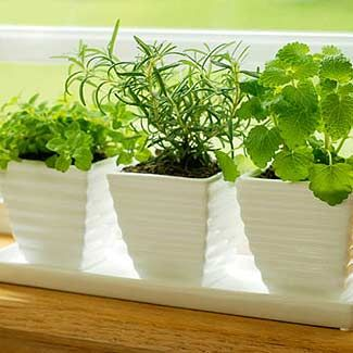 Indoor Herb Garden Winter Grow a winter herb garden easy indoor garden workwithnaturefo