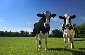 Methane: 4 Steps to Reduce this Greenhouse Gas