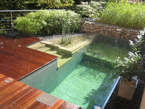 natural pools - natural swimming pools and ponds
