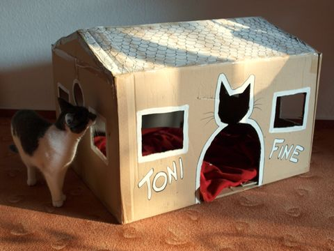 Vertebrate, Carnivore, Snout, Felidae, Small to medium-sized cats, Box, Cardboard, Cat, Whiskers, Packaging and labeling,