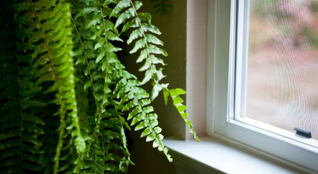 Image result for brilliant-ways-to-keep-your-home-in-summer-cool-without-air-conditioning