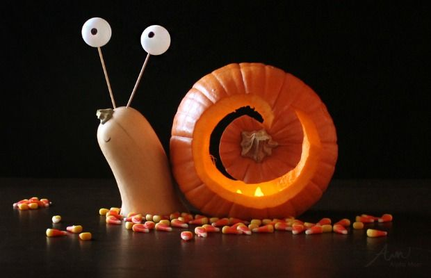 Pumpkin Halloween | 25 Easy Pumpkin Carving Ideas For Halloween 2018 Cool Pumpkin