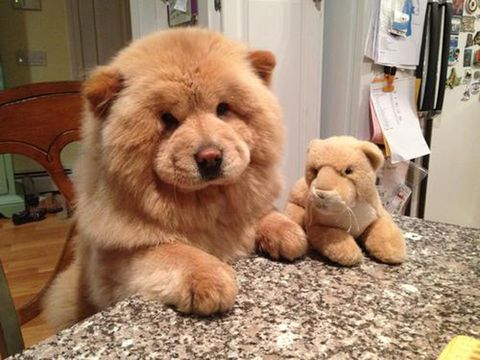 Pets With Stuffed Animals - Cute Animal Photos