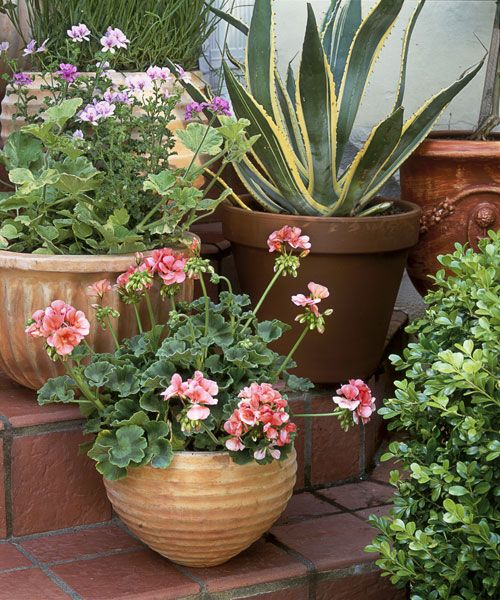 & 16 Container Gardening Ideas - Potted Plant Ideas We Love