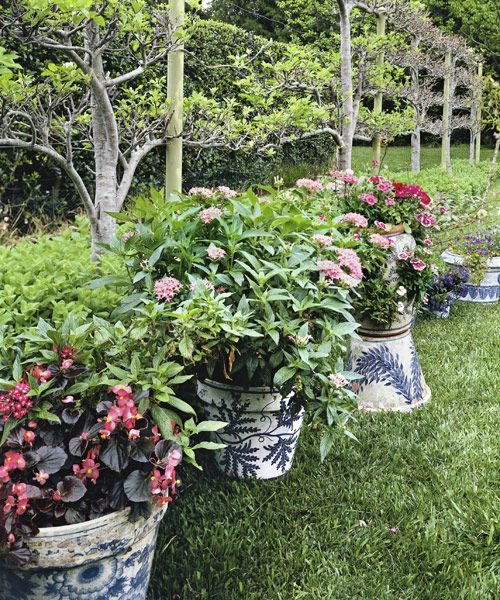 16 container gardening ideas potted plant ideas we love workwithnaturefo