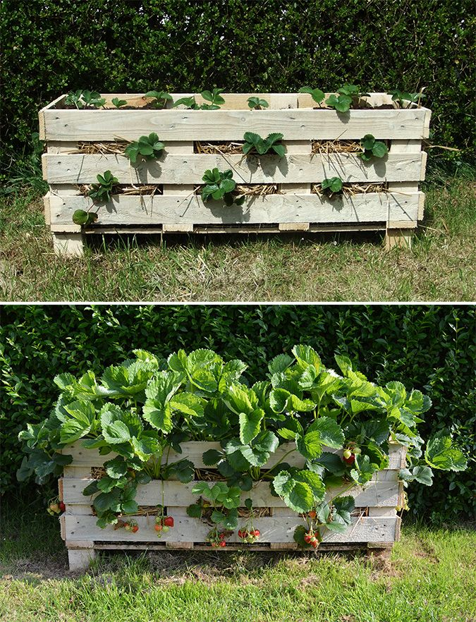 Garden Pallet Diy Pallet Project Ideas