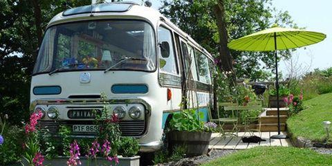Motor vehicle, Plant, Vehicle, Bus, Woody plant, Automotive lighting, Garden, Commercial vehicle, Public transport, Windscreen wiper,