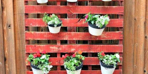 Flowerpot, Plant, Wood, Interior design, Houseplant, Hardwood, Annual plant, Herb, Subshrub,