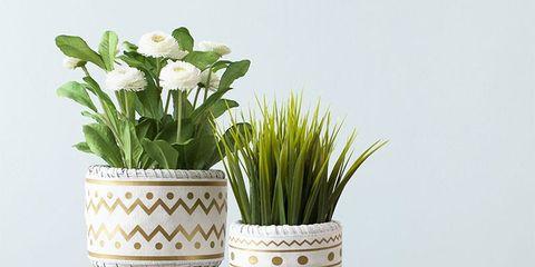 Flowerpot, Botany, Vase, Interior design, Flowering plant, Houseplant, Artifact, Still life photography, Pottery, Plant stem,