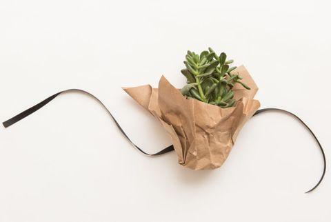 Leaf, Ingredient, Natural foods, Produce, Herb, Vegetable, Leaf vegetable, Whole food, Kitchen utensil, Natural material,