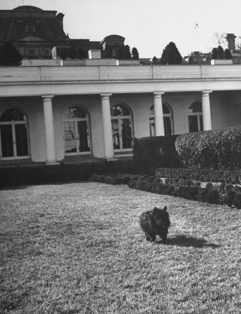 Carnivore, Monochrome, Lawn, Column, Monochrome photography, Shadow, Small to medium-sized cats, Felidae, Yard, Mansion,