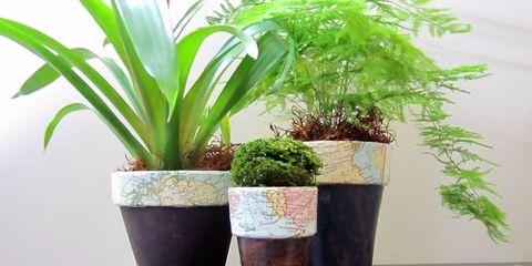 Flowerpot, Plant, Interior design, Terrestrial plant, Houseplant, Vase, Pottery, Vascular plant, Plant stem, Annual plant,