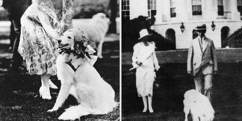 Human, Dog breed, Vertebrate, Photograph, Hat, Headgear, Dog, Carnivore, Fur, Companion dog,
