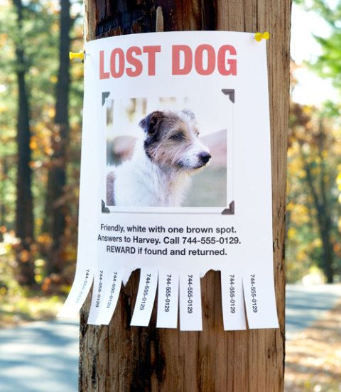 Every Missing Pet Poster Tells Story >> Finding A Lost Pet How To Find A Missing Cat Or Dog