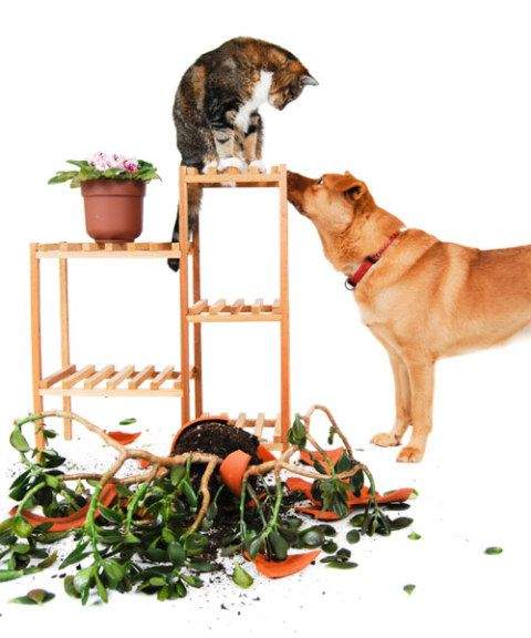 Pet Problems And Solutions Pet Questions And Answers